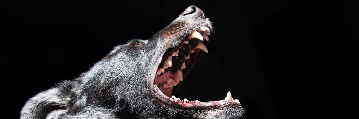 Who Is Liable When a Dog Bites Another Dog?